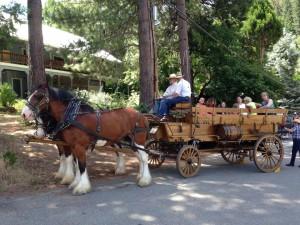 Wagon rides at the Community Picnic